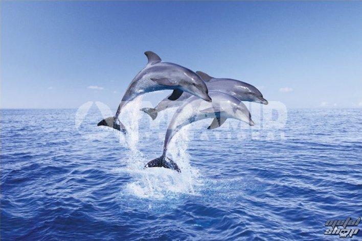 plagát Dolphin Trio - Pyramid Posters - PP30267