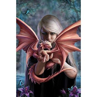 plagát ANNE STOKES - Dragonkin - PYRAMID POSTERS - PP33276
